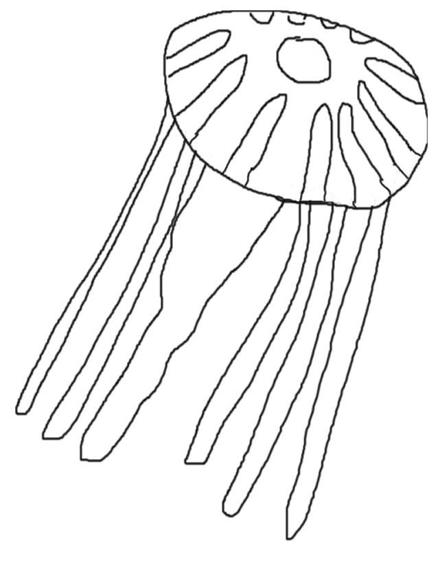 Coloriage et dessins gratuits Animal Marin gélatineux à imprimer