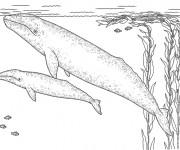 Coloriage Baleine et son bébé dans l'eau