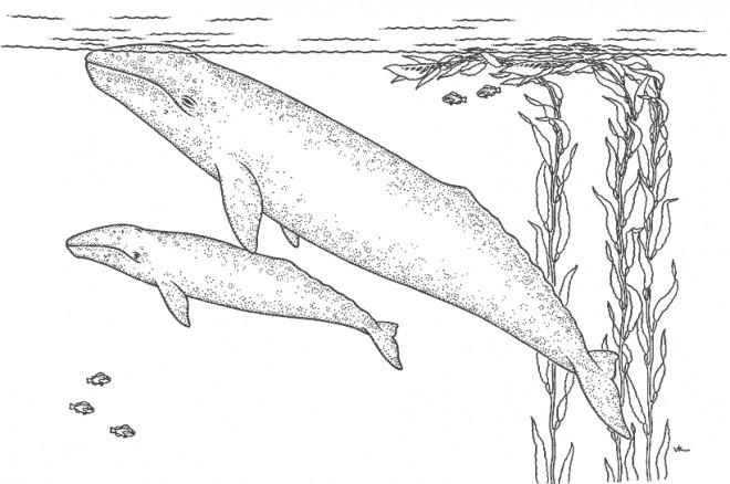 Coloriage et dessins gratuits Baleine et son bébé dans l'eau à imprimer