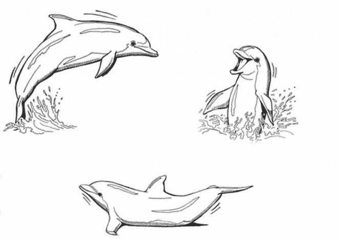 Coloriage Dauphins Sur La Mer Dessin Gratuit à Imprimer