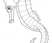 Coloriage Hippocampe de Mer couleur