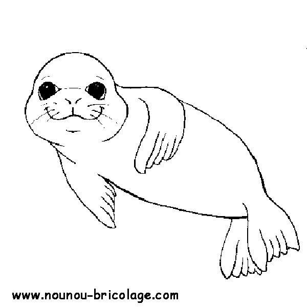 Coloriage phoque en souriant dessin gratuit imprimer - Coloriage de phoque ...