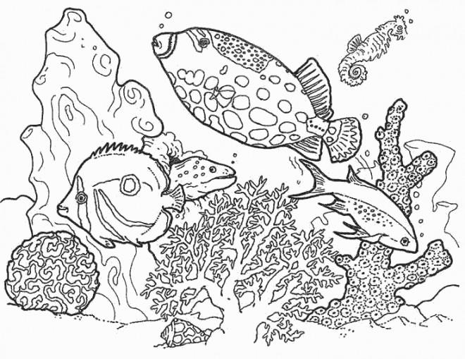 Coloriage et dessins gratuits Poissons de Décoration à imprimer