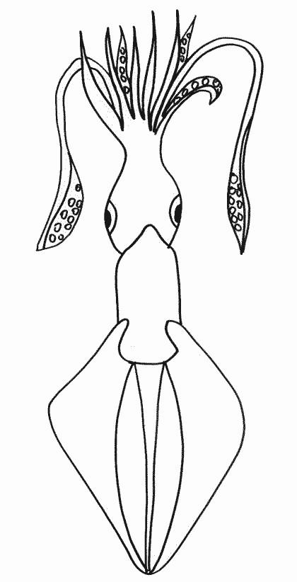 Coloriage et dessins gratuits Poulpe de Mer simple à imprimer