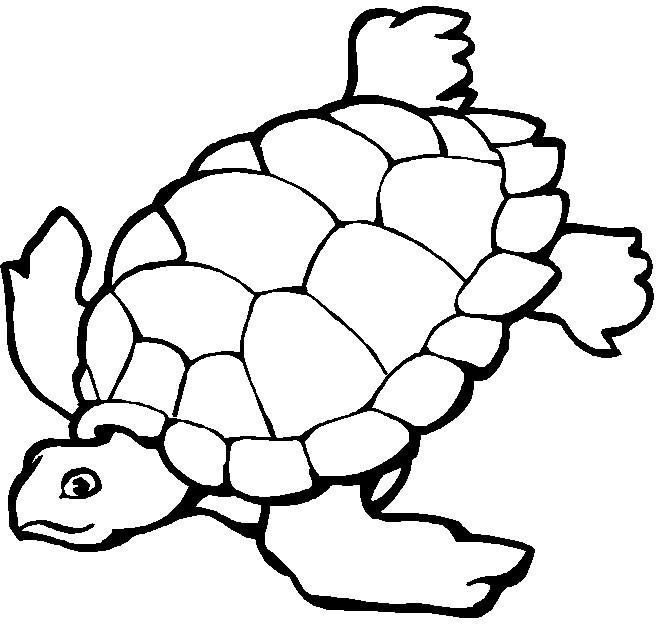 Coloriage et dessins gratuits Tortue de Mer vecteur à imprimer