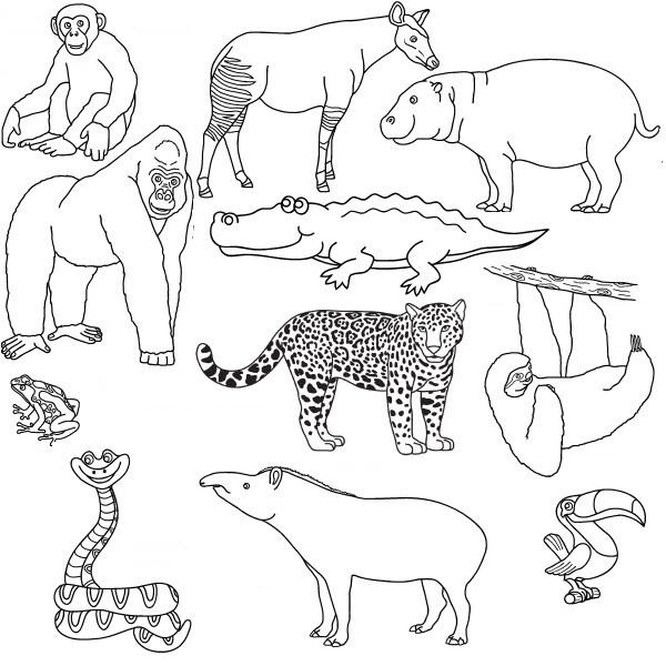 Coloriage Animaux De La Savane Dessin Gratuit A Imprimer