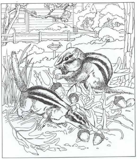 Coloriage et dessins gratuits Animaux en nature à imprimer