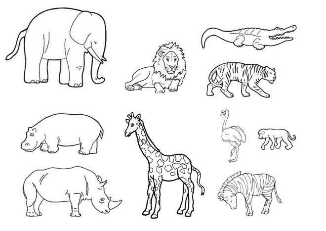 Coloriage animaux sauvages t l charger - Dessins d animaux sauvages ...