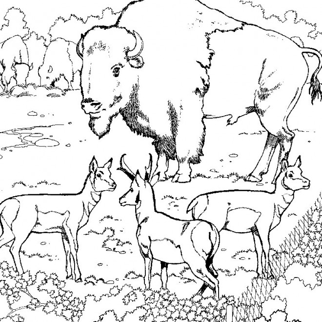 Coloriage animaux sauvages au zoo dessin gratuit imprimer - Coloriages animaux sauvages ...