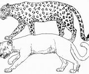 Coloriage et dessins gratuit Animaux Sauvages sans tâches à imprimer