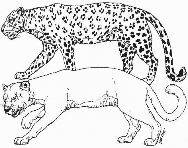 Coloriage animaux sauvages sans t ches dessin gratuit - Coloriages animaux sauvages ...