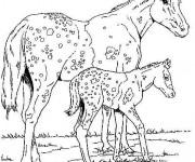 Coloriage Animaux Sauvages Gratuit à Imprimer Liste 40 à 60