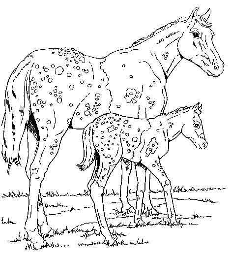 Coloriage chevaux sauvages en am rique dessin gratuit imprimer - Coloriage cheval et poulain ...