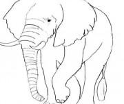 Coloriage Éléphant en noir et blanc