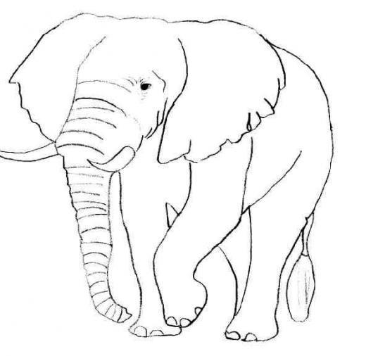 Coloriage et dessins gratuits Éléphant en noir et blanc à imprimer