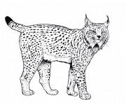 Coloriage et dessins gratuit Félins Sauvages à imprimer