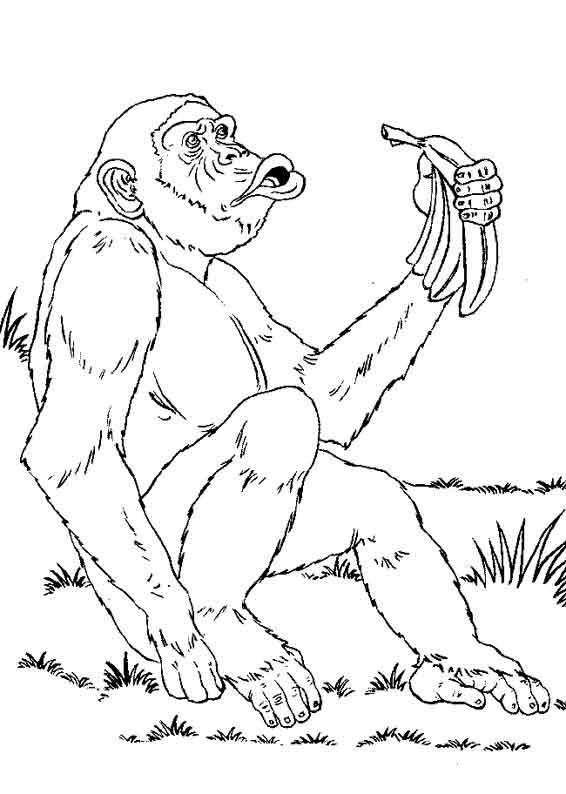 Coloriage et dessins gratuits Gorille de la Savane à imprimer