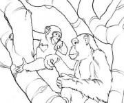 Coloriage Gorille Sauvage en famille