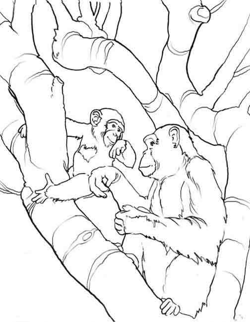 Coloriage et dessins gratuits Gorille Sauvage en famille à imprimer