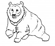 Coloriage Gros Ours sauvage