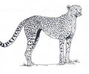 Coloriage dessin  Guepard 3