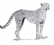 Coloriage et dessins gratuit Guépard couleur à imprimer