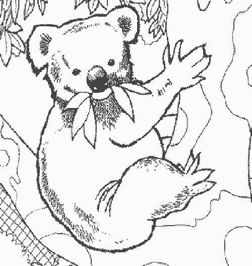 Coloriage et dessins gratuits Koala facile pour maternelle à imprimer