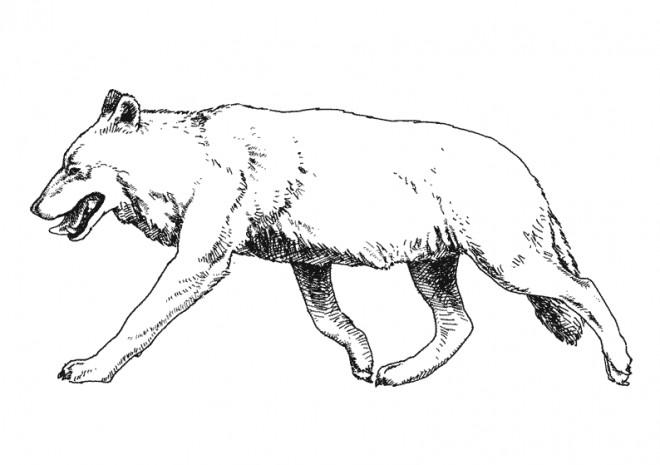 Coloriage et dessins gratuits Le Loup malin à imprimer