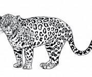 Coloriage et dessins gratuit Léopard réaliste à imprimer