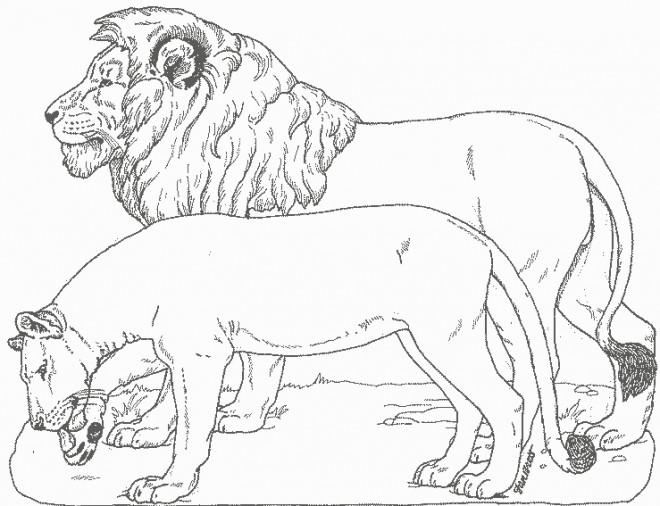 Coloriage et dessins gratuits Lion et Lionne stylisé à imprimer