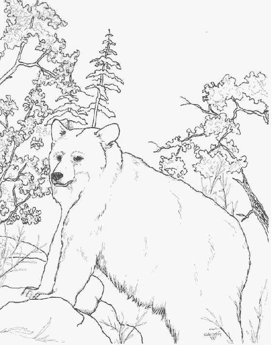 Coloriage ours brun sauvage dessin gratuit imprimer - Coloriage animaux sauvages ...