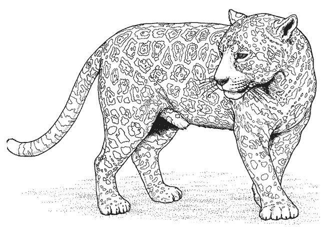 Coloriage panth re d 39 afrique dessin gratuit imprimer - Coloriages animaux sauvages ...