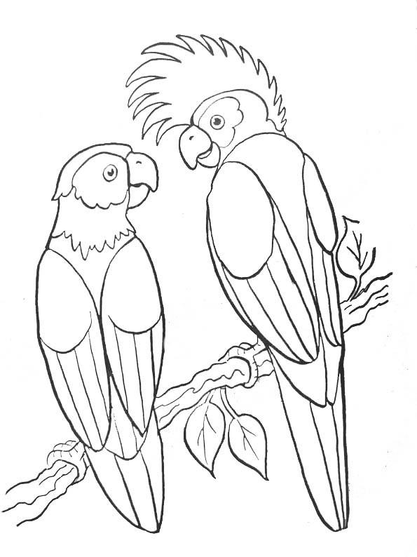 Coloriage perroquets sauvages maternelle dessin gratuit imprimer - Perroquet en dessin ...