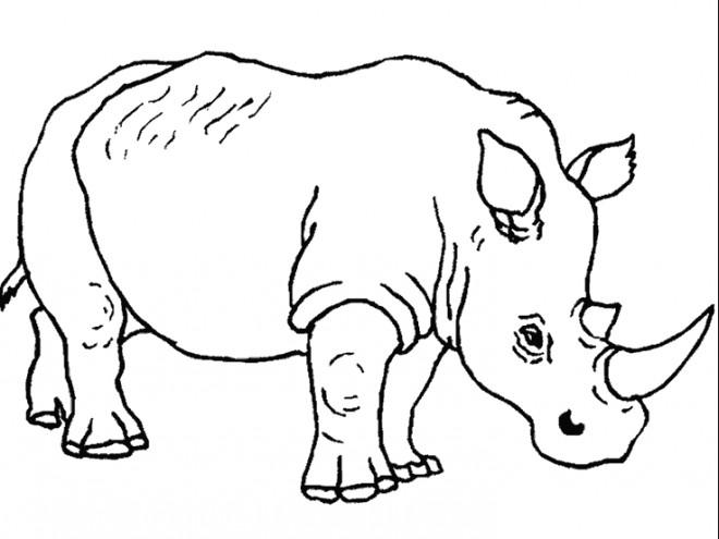 Coloriage Rhino A Decorer Dessin Gratuit A Imprimer