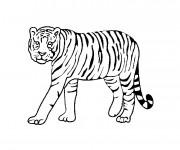 Coloriage Tigre animal sauvage