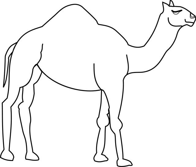 Coloriage un chameau simple dessin gratuit imprimer - Dessins d animaux sauvages ...