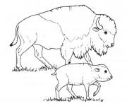 Coloriage et dessins gratuit Bisonne et son bébé à imprimer