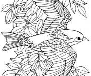 Coloriage Fantastique oiseau en vol