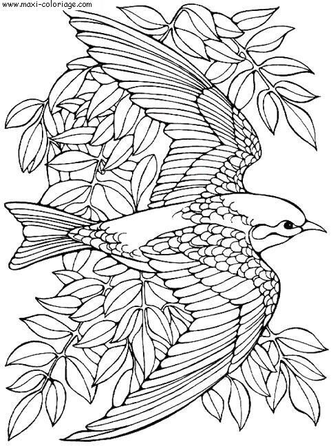 Coloriage fantastique oiseau en vol dessin gratuit imprimer - Dessin oiseau en vol ...