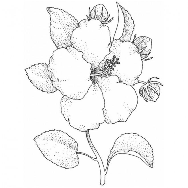 Coloriage et dessins gratuits Adulte Fleur réaliste à imprimer