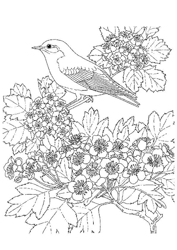 Coloriage et dessins gratuits Adulte Fleurs et L'oiseau à imprimer