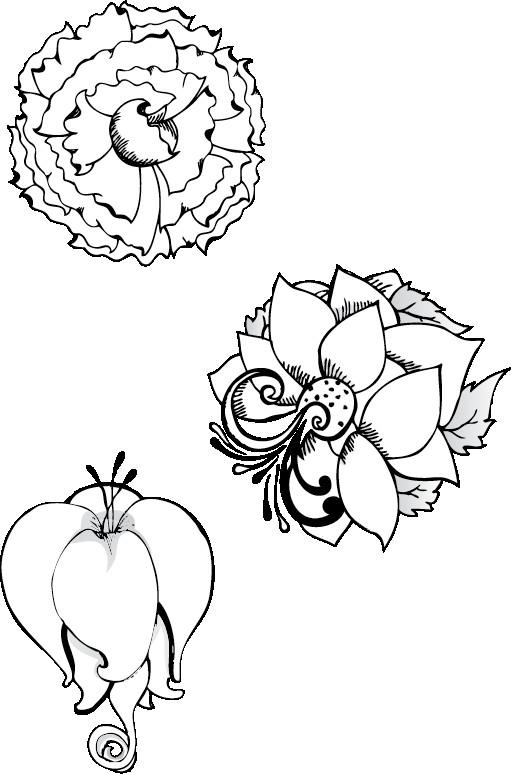 Coloriage des fleurs exotique couleur dessin gratuit - Dessin de fleur en couleur ...