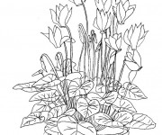 Coloriage et dessins gratuit Fleurs dans la nature à imprimer