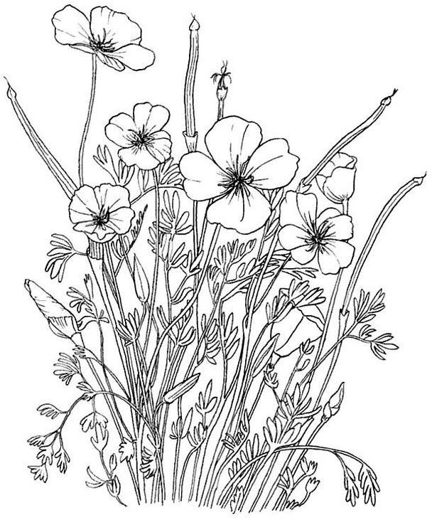 Coloriage et dessins gratuits Fleurs Adultes au crayon à imprimer