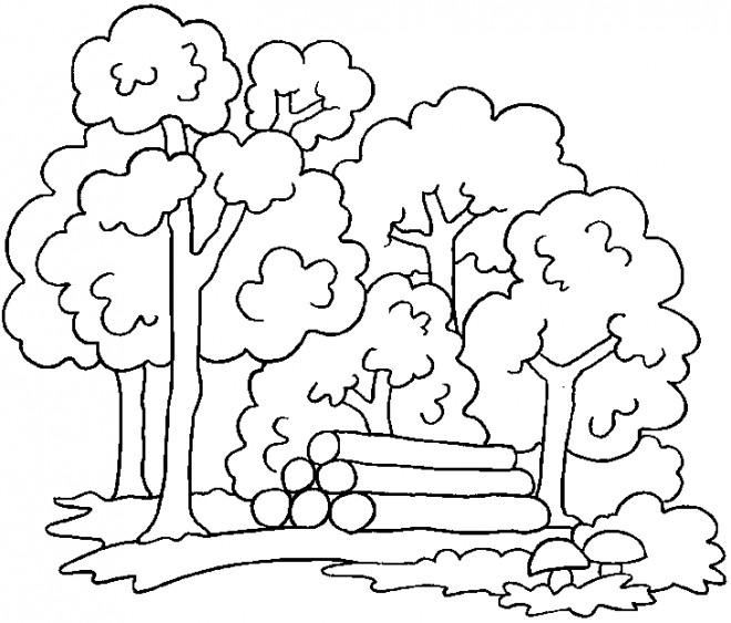 Coloriage et dessins gratuits Forêt couleur à imprimer