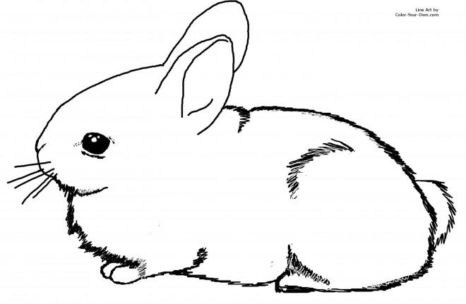 Coloriage et dessins gratuits Lapin à colorier à imprimer