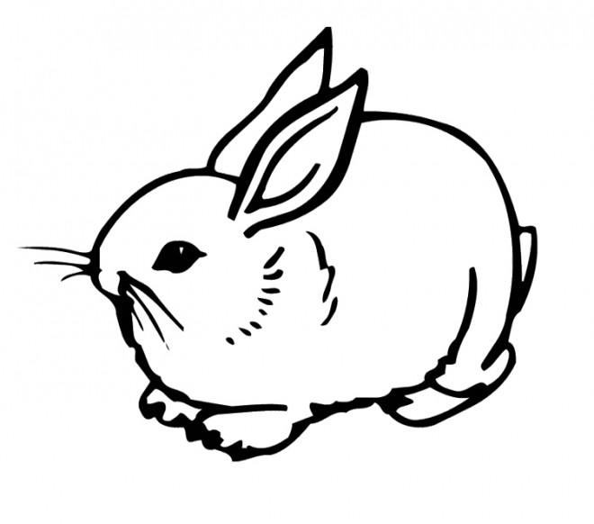Coloriage lapin mignon 18 dessin gratuit imprimer - Dessin lapin mignon ...