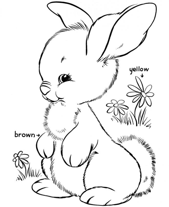 Coloriage et dessins gratuits Lapin Mignon au jardin à imprimer