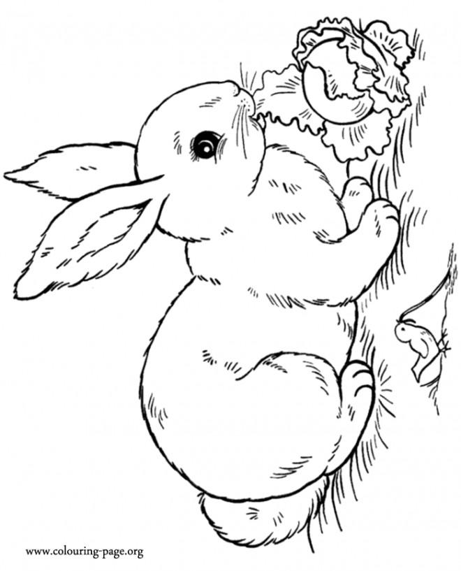 Coloriage et dessins gratuits Lapin Mignon dans le Champ à imprimer