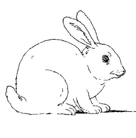 Coloriage et dessins gratuits Lapin Mignon sur ordinateur à imprimer